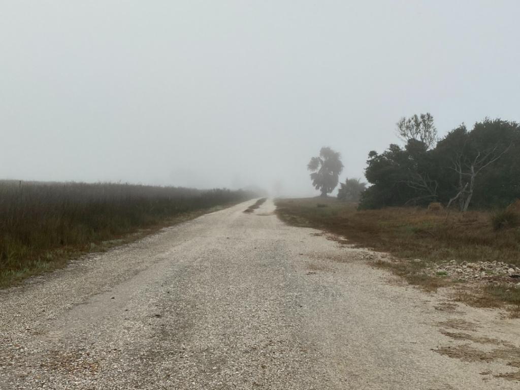 Fog and Fear